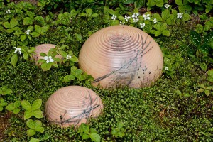 Yard mushrooms by Mike Stoy